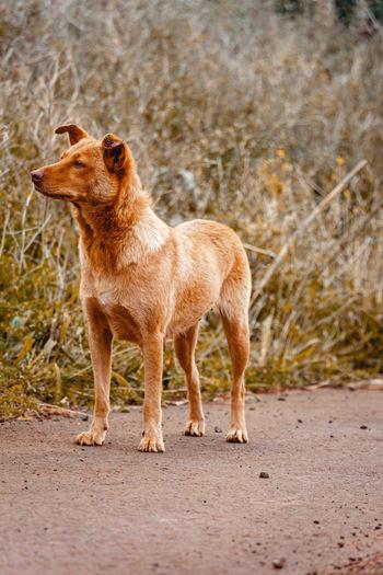 Full length of a dog on sand