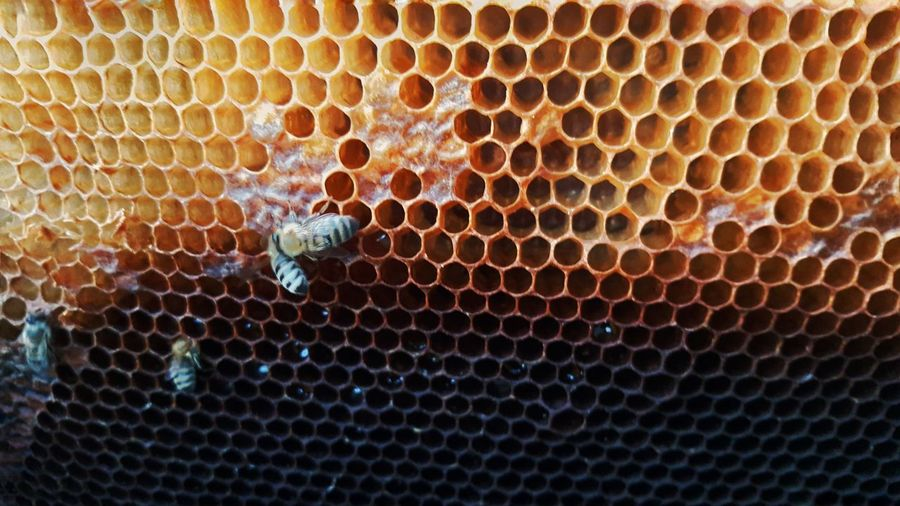Beehive Outdoors Close-up Animal Themes Day No People Nature Honeycomb Like4like Note5camera PhonePhotography Mobilephotography Bee Bee 🐝 Bees Beechleaves Nature Honey Bee Honey Hony Bee Hony Likesforlikes Likes Photography Beauty In Nature