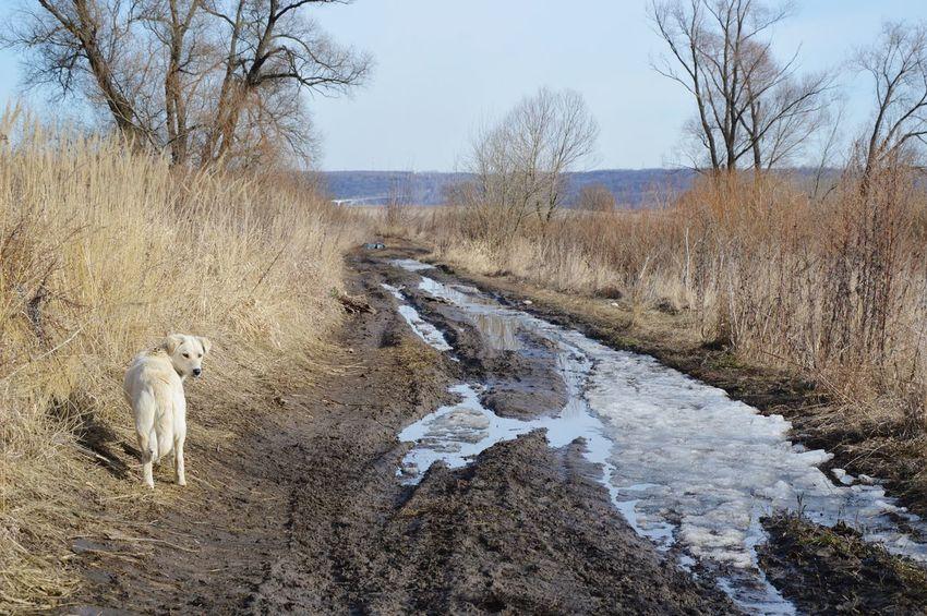 Берег Оки. Неизвестная собака, местный страж. дома❤ Дорога собака Хорошая погода прогулка ступино