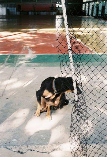 Pets Dog Water
