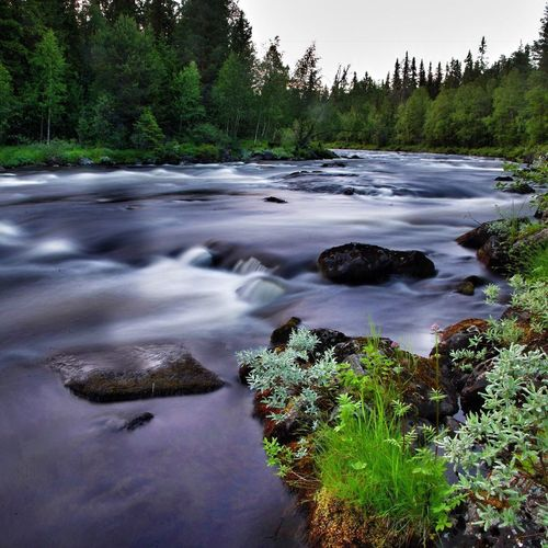 In The River Storan In Dalarna 😊😍😎 Tree Water Nature Forest Scenics No People Beauty In Nature Landscape Tranquility Tranquil Scene Outdoors Sweden Fern Nature Mountain Dalarna