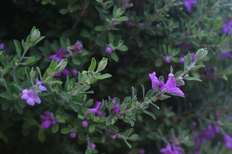 Summer Flowers Cyprus Nofilter