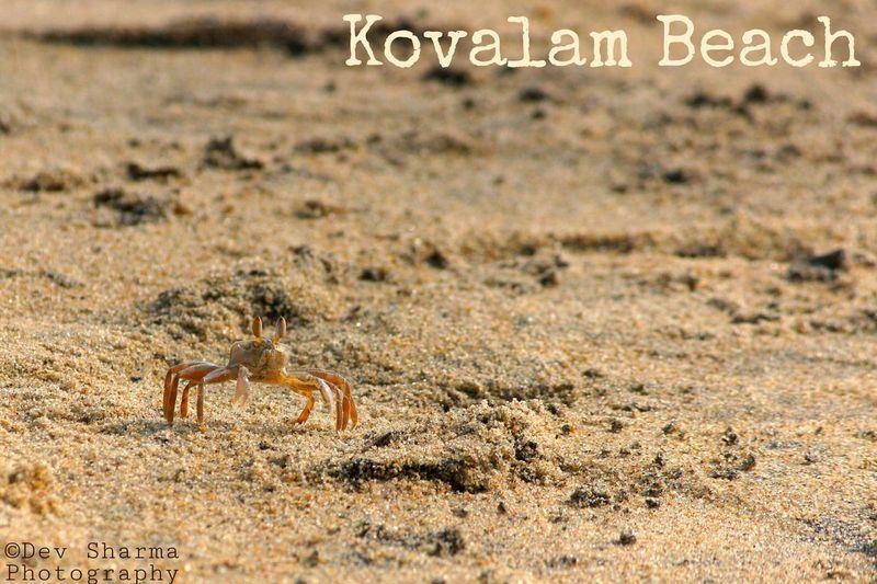Finding food. Crap Sealife Beach Beachphotography Beauty In Nature Chennai Kovalam Beach