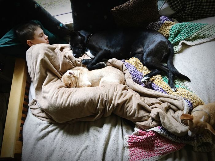 High angle view boy with dogs on bed at home
