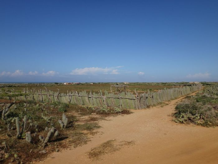 Cactus Cactus Fence Animal Themes Arid Climate Beauty In Nature Blue Day Horizon Over Land Landscape Mammal Nature No People Outdoors Scenics Sky Tranquil Scene Tranquility