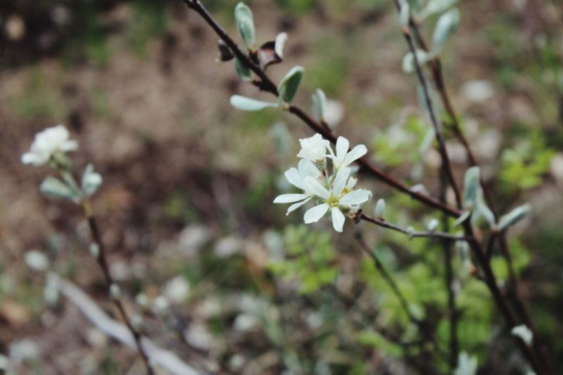 Nature Flower Growth Petal White Color Fragility Blossom Freshness Growth Close-up Beauty In Nature Focus On Foreground Nature Flower Head Plant In Bloom Springtime Blooming Field Day Growing Outdoors