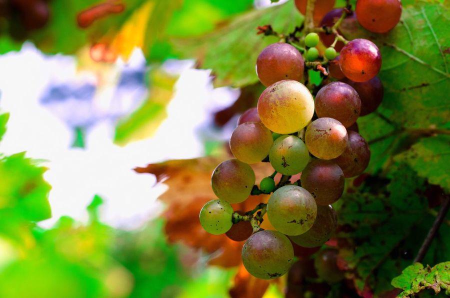 Fruit Food And Drink Wine Wein Trauben Weintrauben