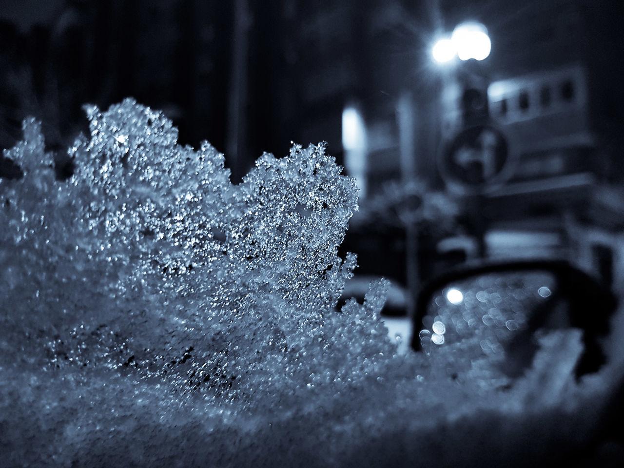 CLOSE-UP OF SNOW ON ILLUMINATED LEAF