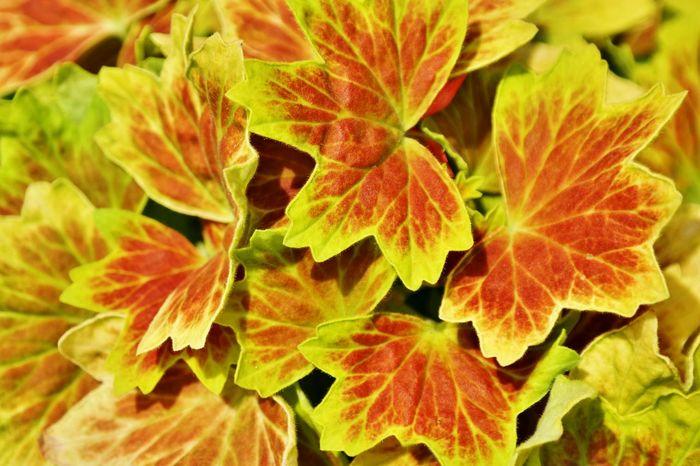 Leaf Leafmania Eyeem Fauna Leafes Golden Moment