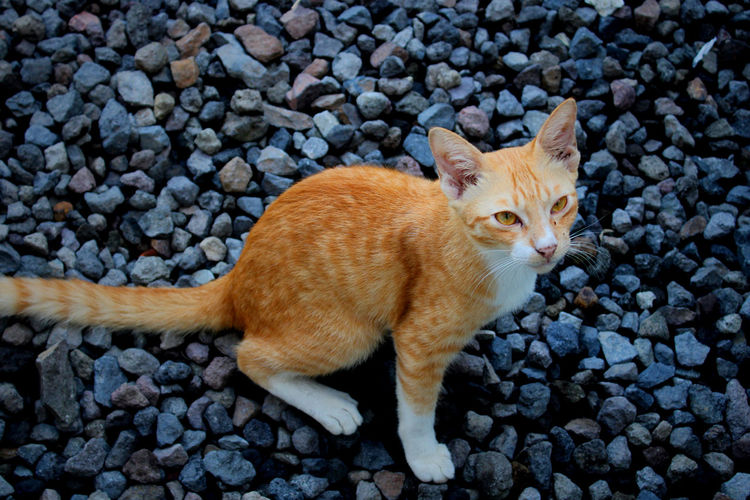 High angle view of cat lying on pebbles
