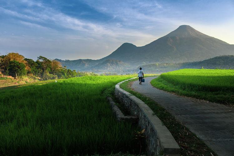 Rear view of man walking on road amidst green landscape