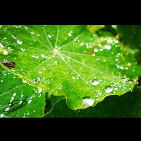 Green Plant Life Raindrops Followme