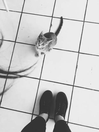 I Love My Cat ❤ Cat♡ Cat Playing With The Animals Animals Love Animals Animal Photography EyeEm Animal Lover The Places I've Been Today Home Sweet Home