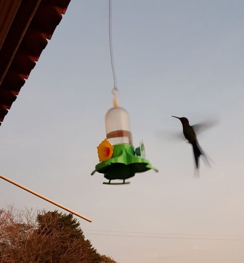 Beija flor EyeEm Speed Bird Bird Flying