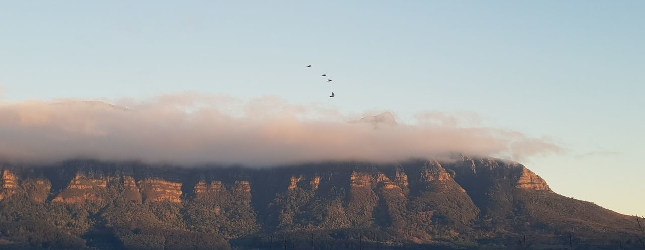 Table Mountain with Tablecloth Clouds And Sky Magnificent View Birds In Flight Nature Photography Mountain