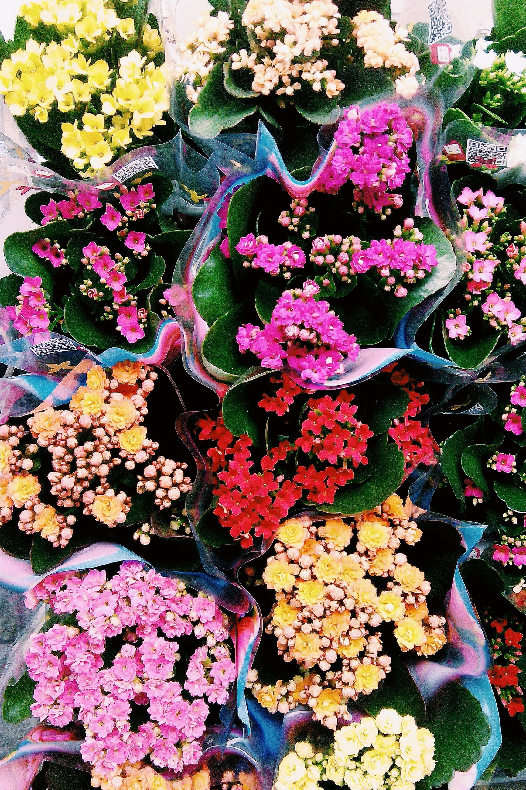 flower, freshness, fragility, petal, beauty in nature, growth, high angle view, pink color, blooming, multi colored, flower head, plant, nature, in bloom, abundance, blossom, bouquet, bunch of flowers, springtime, leaf