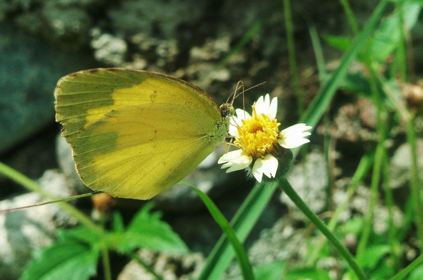A taste of freshness❤ Flower Insect Butterfly - Insect Nature Freshness Beauty In Nature Outdoors
