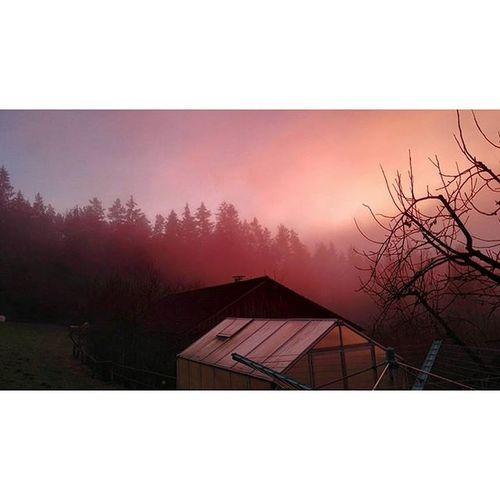 powww, richtig surreal ! Nebel Plus Sonnenntergang Daheim Imherbst Lastjear Huaweishot Nachlangenmausschlefen Ende