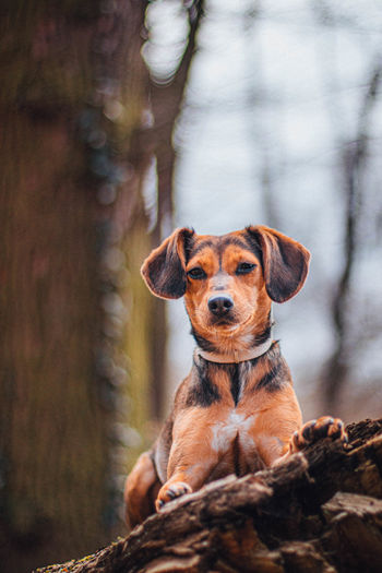 Portrait of dog sitting on tree