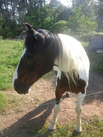 Crin Blanc Horse Cheval