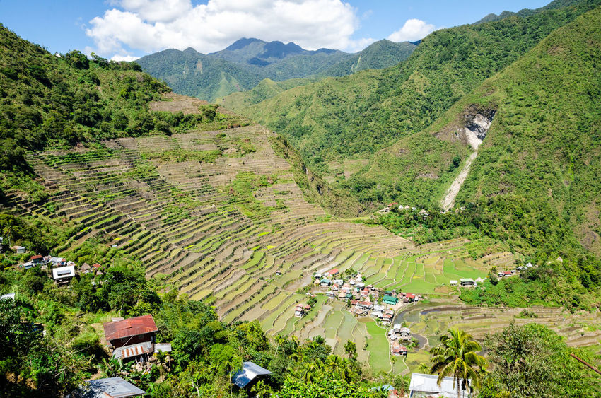 Rice terraces in the Philippines. The village is in a valley among the rice terraces. Rice cultivation in the North of the Philippines, Batad, Banaue. ASIA Agriculture Batad Farm Field Green Luzon Nature Philippines Plant Rice Travel Banaue Food Ifugao Irrigation Island Mountain Soil Terraced Field Valley
