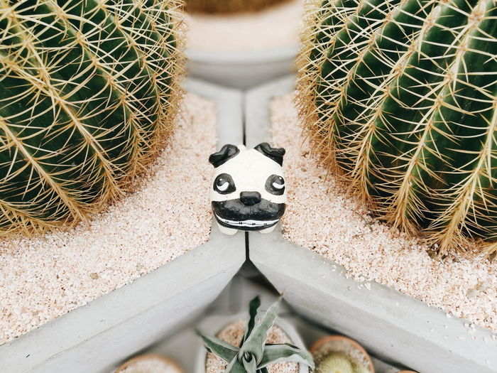 2 Cactus Succulent Plant Cactus Green Color Close-up Potted Plant No People Thorn High Angle View Day Plant Spiked Growth Nature Representation Sharp Outdoors Art And Craft Barrel Cactus Animal Representation