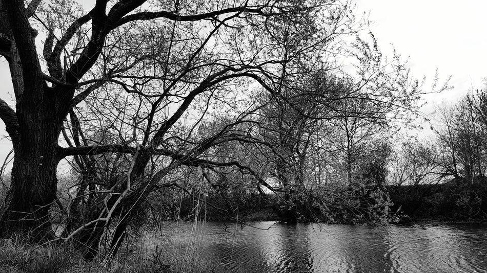 Waldsee Baum Niedersachsen