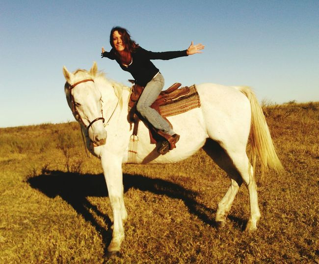 Showcase: December That's Me! And Mr. Heavenly Horseback Riding Going For A Ride  White Horse Big Horse  17 Hands High Saddle And Bridle