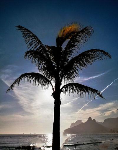 Palm tree at