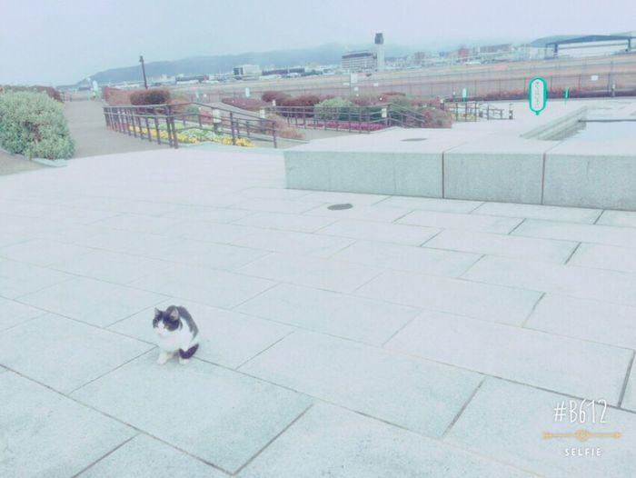 Living Bold cat