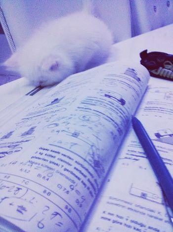 Cat Cat♡ Study Studying Physics Happy