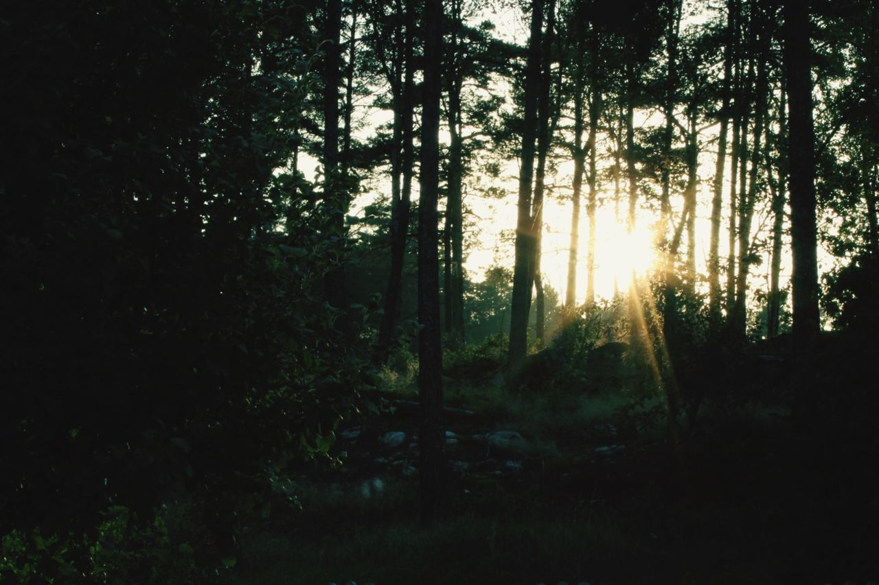 tree, plant, forest, land, tranquility, beauty in nature, nature, growth, scenics - nature, tranquil scene, sunlight, woodland, no people, non-urban scene, sky, outdoors, day, silhouette, wilderness, sun