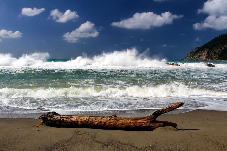 Sea waves rushing towards driftwood at beach