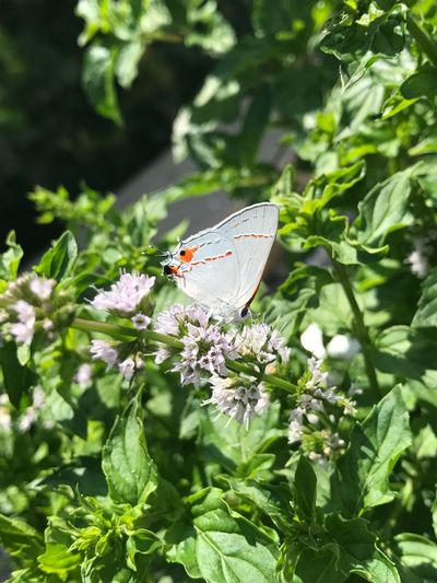 """""""I'm a flower too!"""" Insect Nature Animal Themes One Animal Animals In The Wild Leaf Fragility Butterfly Butterfly - Insect Outdoors Green Color Plant Beauty In Nature Freshness Day No People Close-up Flower EyeEmNewHere"""