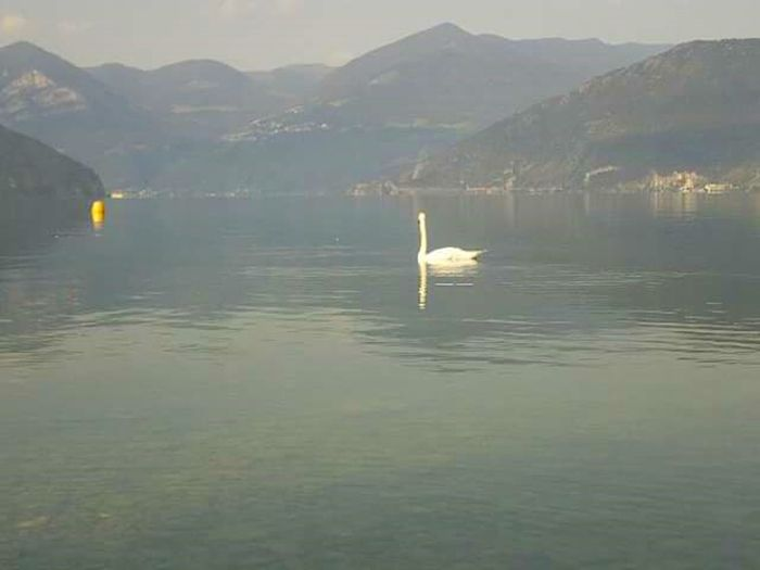 lago lake