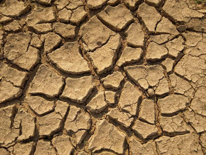 Backgrounds Full Frame Textured  Pattern Arid Climate Cracked Sunlight Close-up Global Warming Environmental Damage Tree Ring Bad Condition Arid Landscape Deforestation Drought Barren Dried Arid