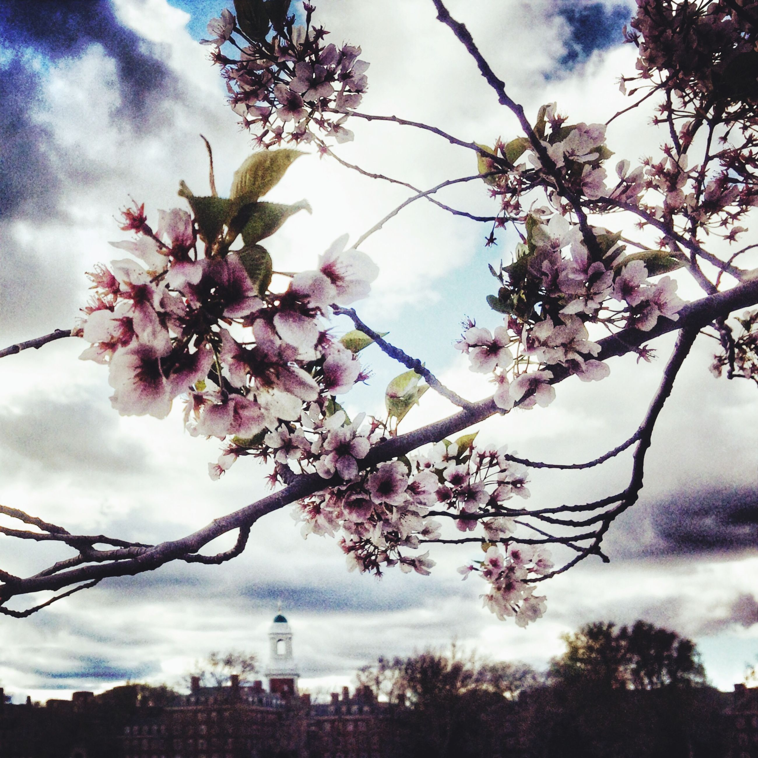 flower, branch, tree, sky, low angle view, growth, freshness, blossom, cherry blossom, beauty in nature, cloud - sky, nature, pink color, fragility, cherry tree, twig, building exterior, springtime, in bloom, built structure