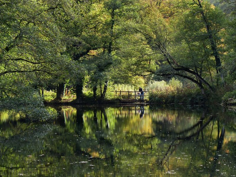 Reflective moments in the West Sussex countryside - October 2015. England, UK West Sussex Ardingly Beauty In Nature Day Forest Growth Lake Nature One Person Outdoors People Real People Reflection Scenics Tranquil Scene Tranquility Tree Water Waterfront
