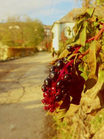 Leica Lens Streetphotography Fruit Nature Outdoors Focus On Foreground Day First Eyeem Photo