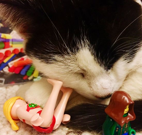 Playground Cat LEGO Afternoon Lasy Hold My Head Break The Mold Visual Feast Pet Portraits