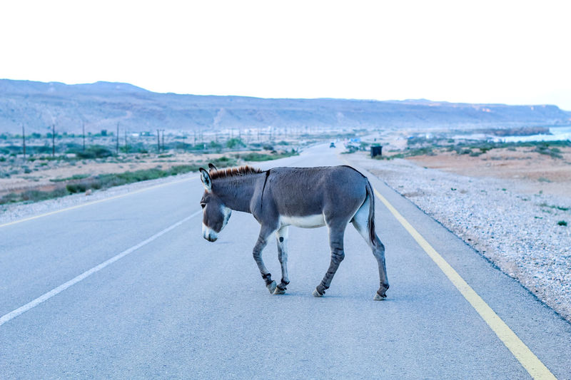 View of horse on road