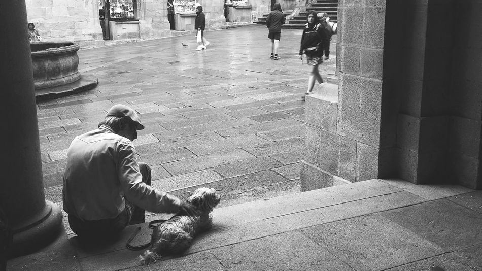 Collected Community Santiago De Compostela Dias De Lluvia Streetphotography Plaza Man Festivities Dog Urban Lifestyle Watching People