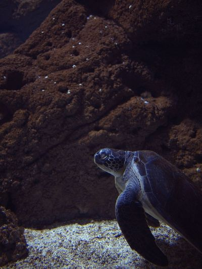 Acquarium Underwater One Animal Animal Themes Animal Animal Wildlife Animals In The Wild Reptile Turtle