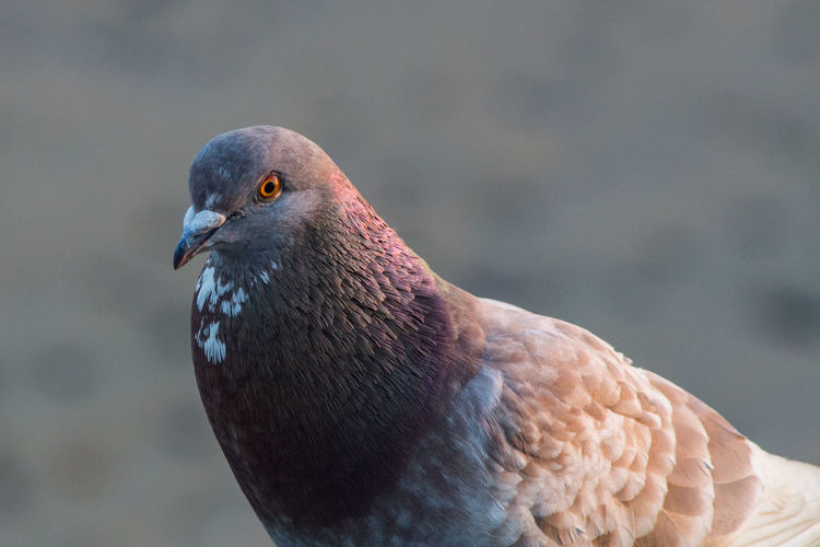 A pigeon. One Animal Animal Wildlife Animals In The Wild Bird Animal Themes Vertebrate Animal Focus On Foreground Close-up Day No People Nature Looking Away Looking Beak Outdoors Animal Body Part Animal Head  Zoology Pigeon Profile View Animal Eye