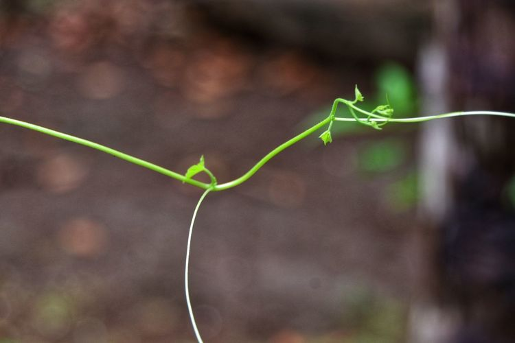New beginning EyeEmNewHere Vine - Plant Leaf Close-up Plant Green Color Plant Stem Curled Up