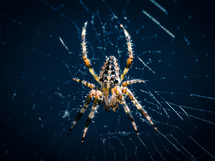 garden spider Beauty In Nature Close-up Focus On Foreground Insect Nature No People Outdoors Spider Web Spyder