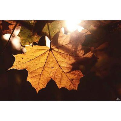 the beautiful and colorful autumn. ⬇⬇⬇⬇⬇⬇⬇⬇⬇⬇ https://www.facebook.com/michaellangerfotografie/ Michaellangerfotografie Autumn Herbst Fotografie Photography Photographyislife Iloveit Iamthephotographer Herbstwetter Färben Farbenspiel CripixtMovement Rcnocrop Earthshoot Brandenburg Germany Storkow Makrophotography Makros Sun Colorful