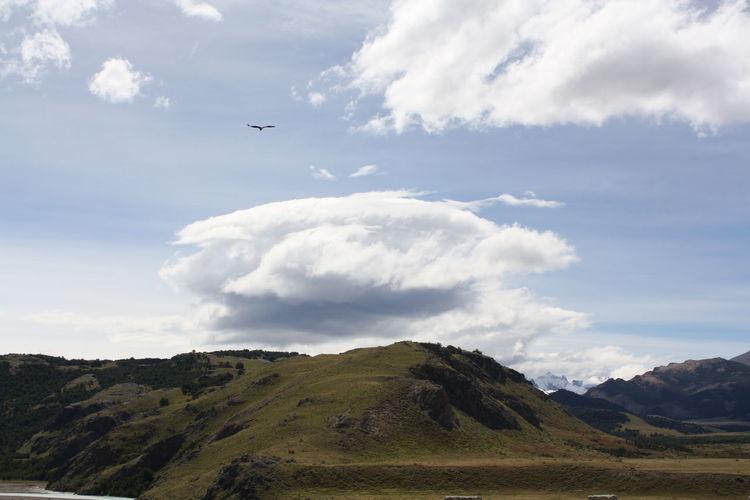 Solitary bird flying above green hills