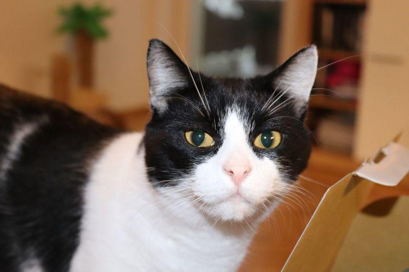 Filou - the cat