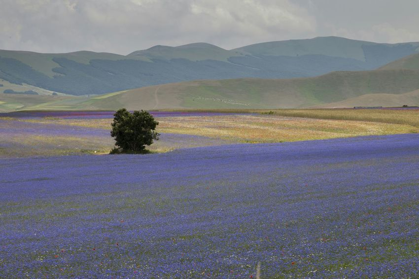 EyeEm Best Shots EyeEm Best Edits Landscape_Collection Landscape_photography Landscape Castelluccio Castellucciodinorcia